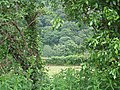 View through the hedge, Ash Lane - geograph.org.uk - 455260.jpg