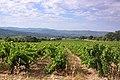 Vignoble AOC Ventoux à Villars près d'Apt.jpg