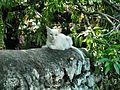 WHITE CAT (4089889947).jpg