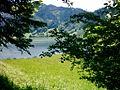 Waldrand - panoramio (2).jpg