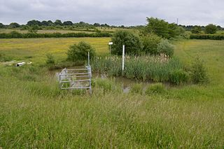 Weald Common Flood Meadows
