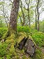Welsh woodland (7819871116).jpg
