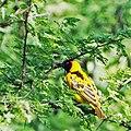 Western Serengeti 2012 06 03 3858 (7557797302).jpg