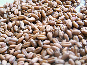 Wheat berry - Uncooked wheat berries