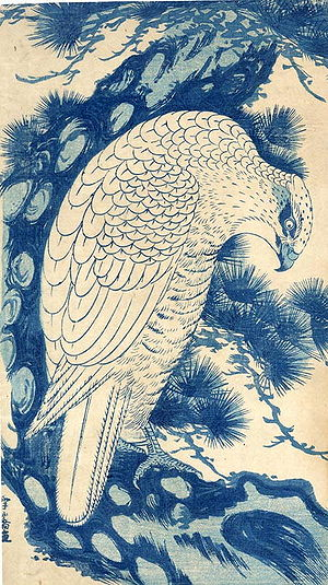 Aizuri-e - Image: White Falcon in a pine tree, woodblock print by Sawa Sekkyô, 13.5 x 7.75 inches
