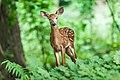 Wildlife-1367217.jpg