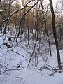 Wintry bukhansan in branches and snow.JPG