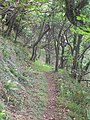 Woodland Trail to the Gazebo - Hartland, August 2011 - panoramio.jpg