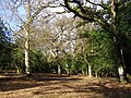 Woodland south of Linwood, New Forest - geograph.org.uk - 145755.jpg