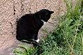 Wraxall 2012 MMB 46 Smudge.jpg