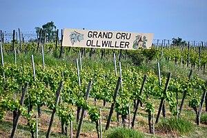 Français : Vignoble Grand Cru Ollwiller, Wuenh...