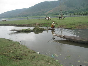 Wular Lake - A boat carrying aquatic plants extracted from the Wular Lake