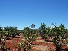 Plantation in Misiones, Argentina.