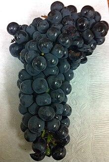 Wine Grapes - Wikipedia