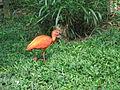 Zoológico de Cali 74.JPG