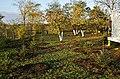 """Padurea"" de brazi din Baleni - panoramio.jpg"