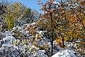 (((مناظر زمستانی باغات مراغه ))) - panoramio.jpg