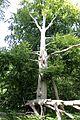(2012-08) Insel Vilm 0147 06.jpg