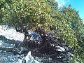 Česvina na brdu 121821.jpg