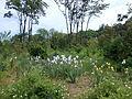 Ботанічний сад ДНУ 5.JPG