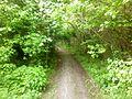 Вхід до Чорного лісу.jpg