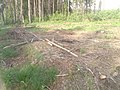 Грубое лесоповальное хамство - panoramio.jpg