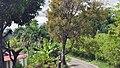 Доминиканская Республика - panoramio (47).jpg