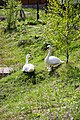 Комплекс отдыха Орлиное гнездо - panoramio (3).jpg