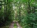 Лиственный лес около реки Цна. (Deciduous forest near the river Cna) - panoramio.jpg