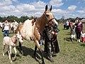 Мадьярские лошади (16732311827).jpg