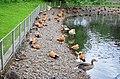 Московский зоопарк. Фото 8.jpg