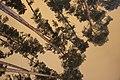Ночные сосны на фоне неба. Б-О Лебяжье озеро. Казань. Январь 2014 - panoramio.jpg