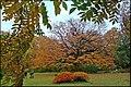 Осень в Ботаническом саду - panoramio (7).jpg