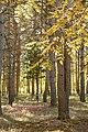 Осінній ліс у Докучаївське.jpg