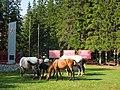 Памятник воинам-землякам, пейзаж с лошадьми, Бурятия, Аршан, 2017.jpg