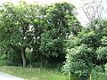 Парк шума Гази Баба во мај (57).JPG