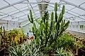 Полярно-альпийский ботанический сад оражерея 3.jpg