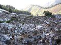 После схода ловины - panoramio (1).jpg