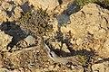Природный бонсай. Toplou. Lasithi. Crete. Greece. Август 2013 - panoramio.jpg