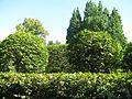 Сирецький дендропарк IMG 2257.jpg