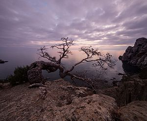 Старі дерева Нового Світу.jpg
