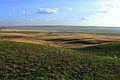 Урочище Утиная гора 15 - panoramio.jpg