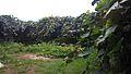 باغ کیوی.jpg