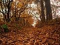 صورة من فصل الخريف ببلدية قنواع .jpg