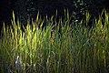 گیاهان در پاییز - باغ بوتانیکال تفلیس 03.jpg