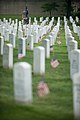 """""""Flags in"""" with The Old Guard in Arlington National Cemetery (17764904229).jpg"""