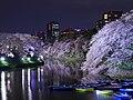 千鳥ヶ淵の夜桜 (Night Cherry Blossoms at Chidorigafuchi) 26 Mar, 2013 - panoramio.jpg