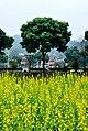 广州最美乡村—红山村 - panoramio (16).jpg