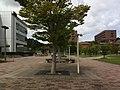 広島県東広島市 - panoramio (3).jpg