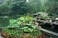 杭州.曲院风荷(荷花展) - panoramio (1).jpg
